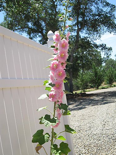 Floweralone 004