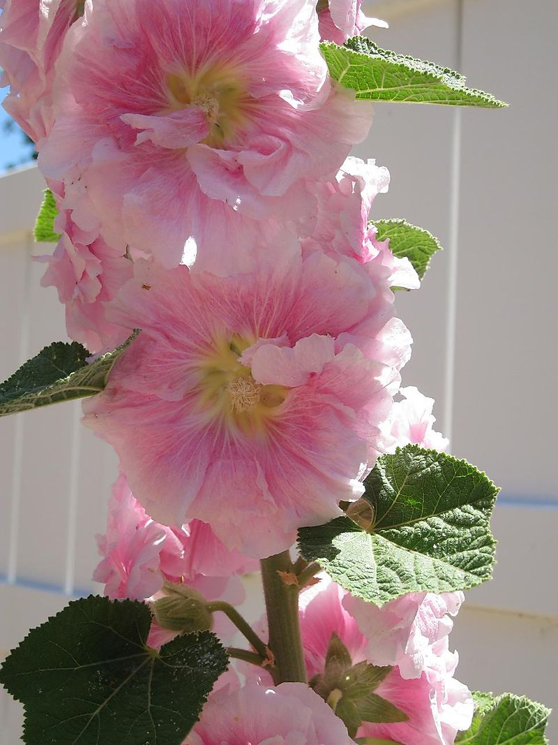Floweralone 003small