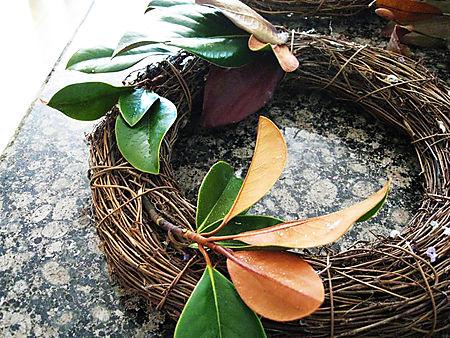 Magnolia 004smallHL