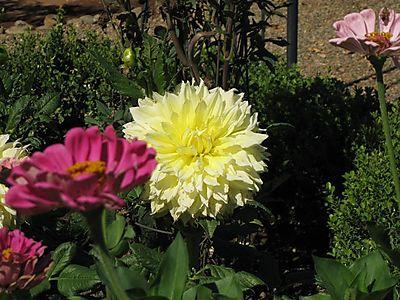 Gardensept08 002small