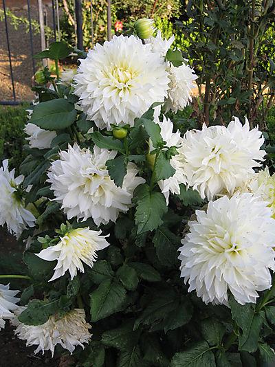 Gardensep2008 001small