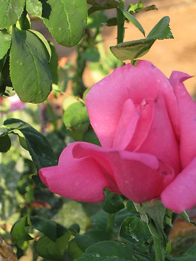 Gardensep2008 002small