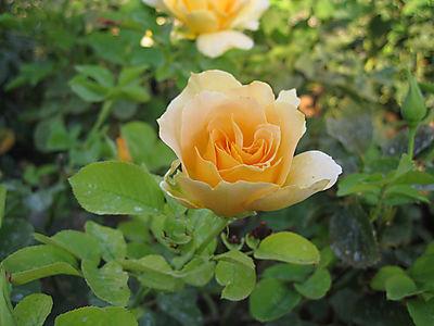 Gardensep2008 005