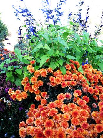 Flowerarrangment 002smallsl