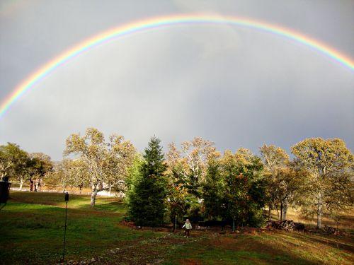Rainbowcarleewhole