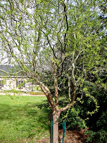 Treeshannon