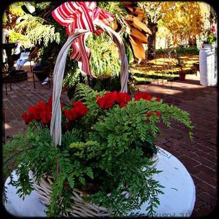 Basketflowers