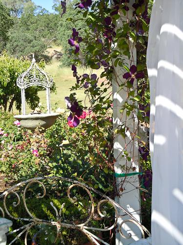Maysgardenpurpleflowers (1 of 1)