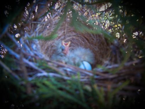 Babybirds (1 of 1)