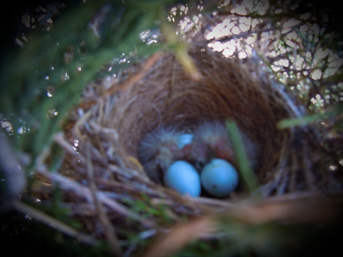 Babybirdsnest (1 of 1)