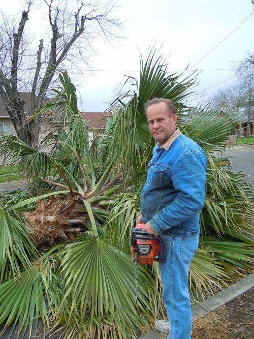 Palmtrees 003small