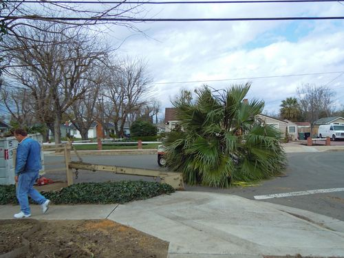 Palmtrees 010small