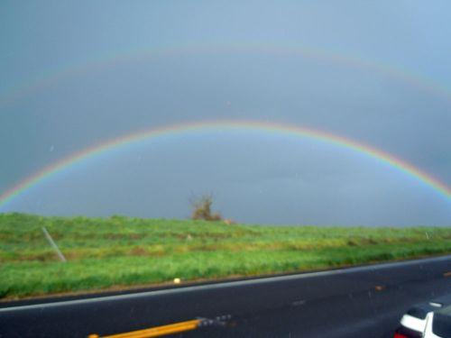 Rainbow 004small