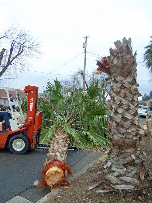 Palmtrees 002small