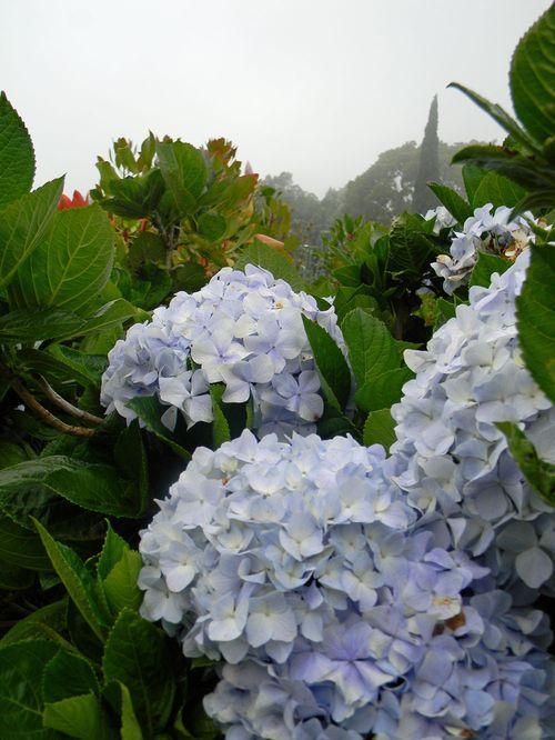Blogflowers6