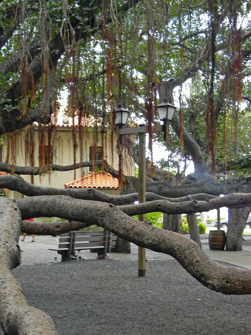 Bloglampposttree