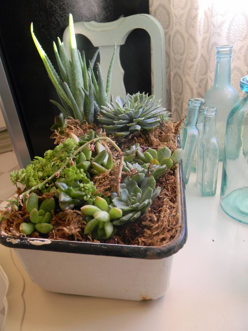 Blogsucculentgarden 004
