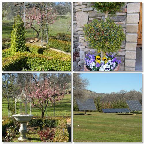 Springgarden2