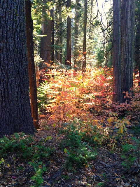 Cabin-trees,picjill