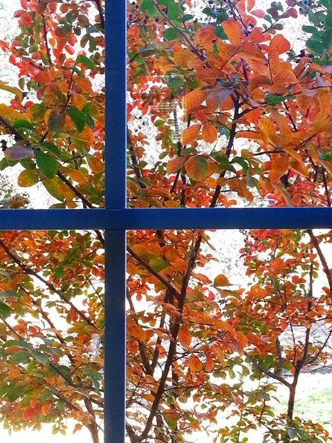 Catheysvalley-window-fall