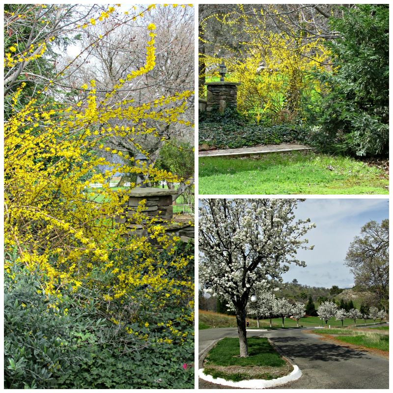Catheys valley yellow Collage