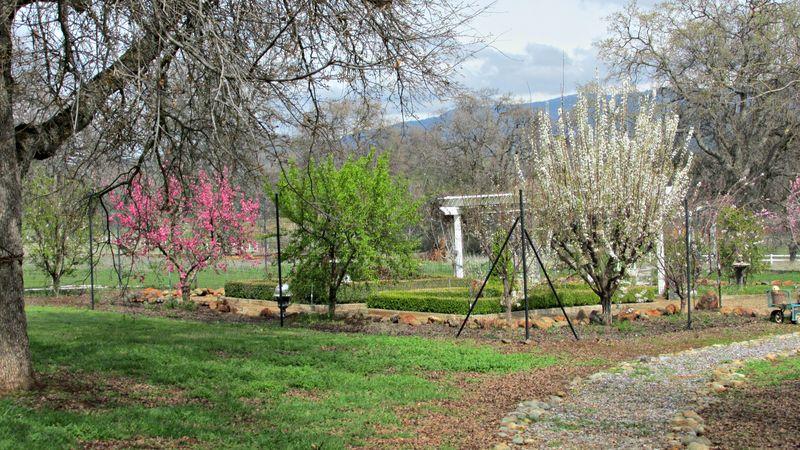 Catheys valley garden