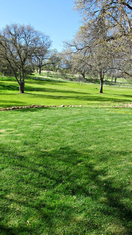 Catheys valley lawn