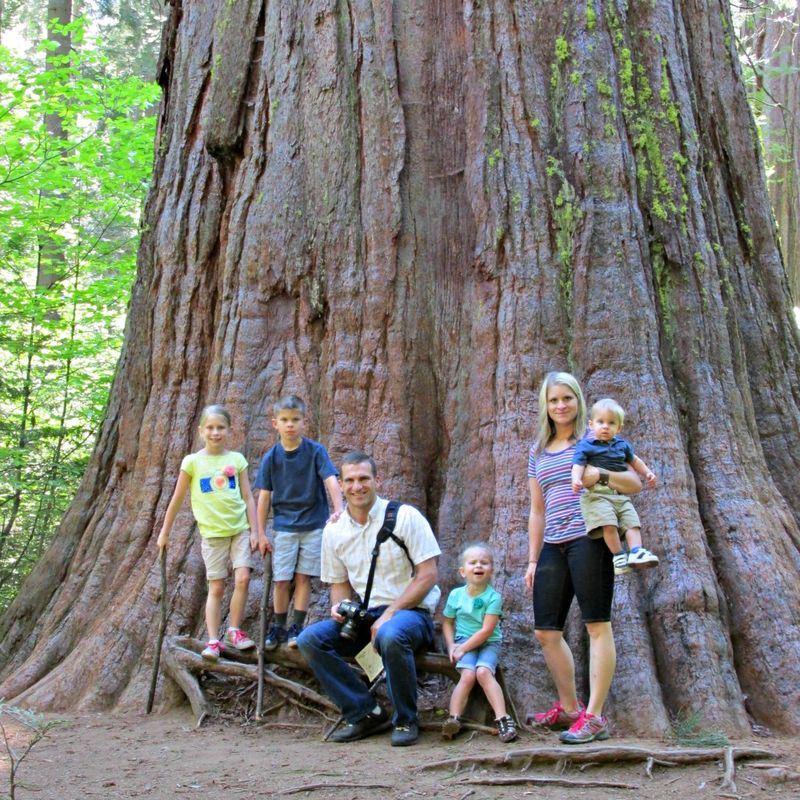 Big trees- family by tree