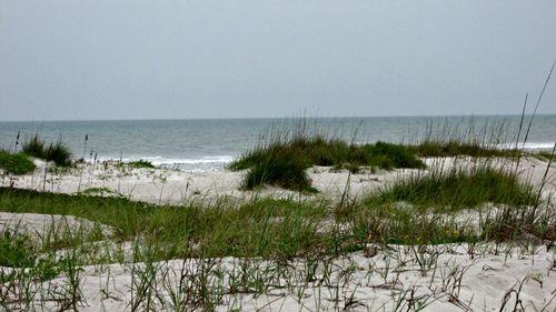 Cocoa beach dunes