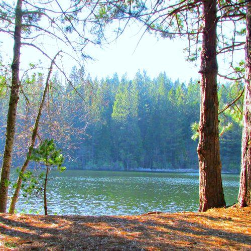 Cabin white pine lake