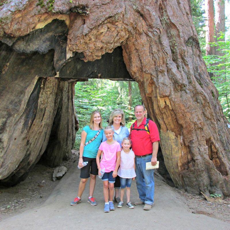 Big trees walk through tree