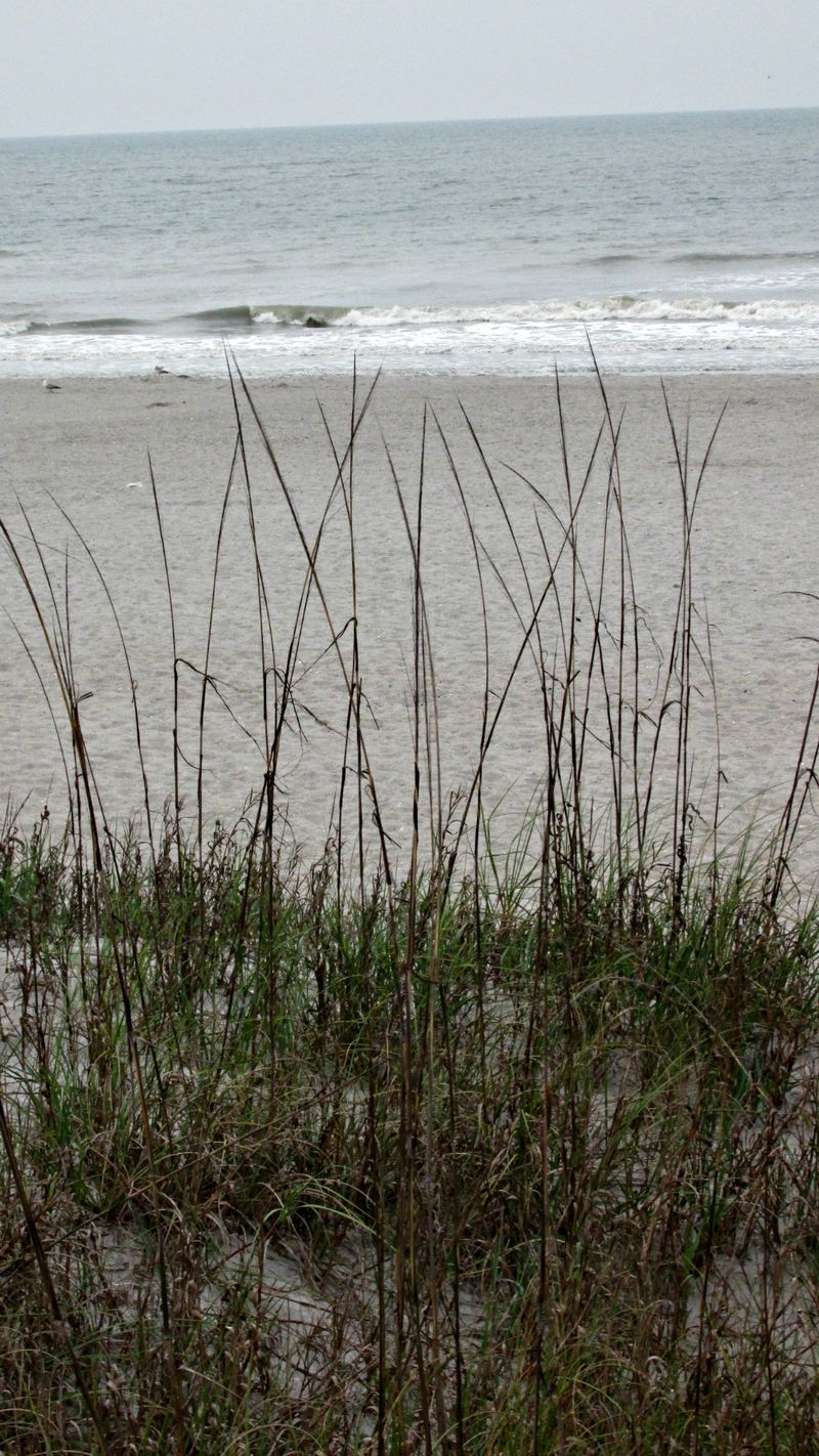 Cocoa beach grass
