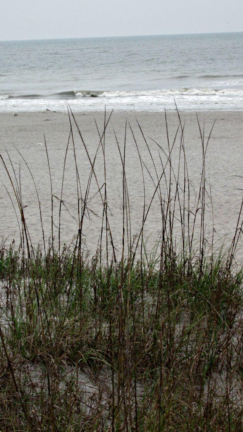Cocoa beach grass