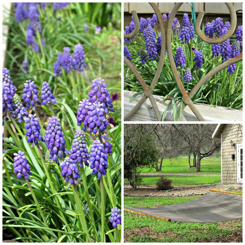 Catheys valley garden Collage