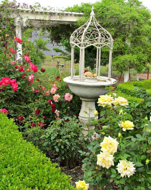 Garden yellow roses