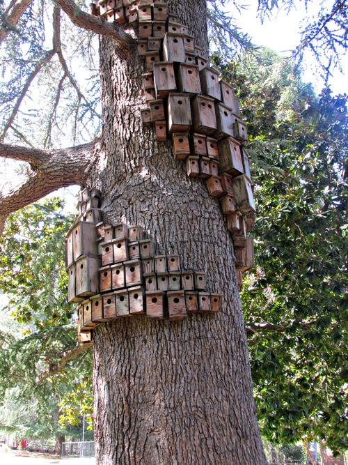 Villa montalvo control tower bird houses