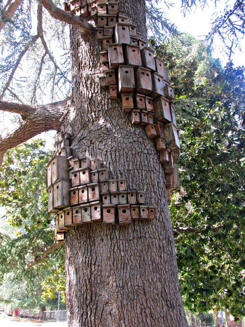 Villa montalvo control tower bird houses