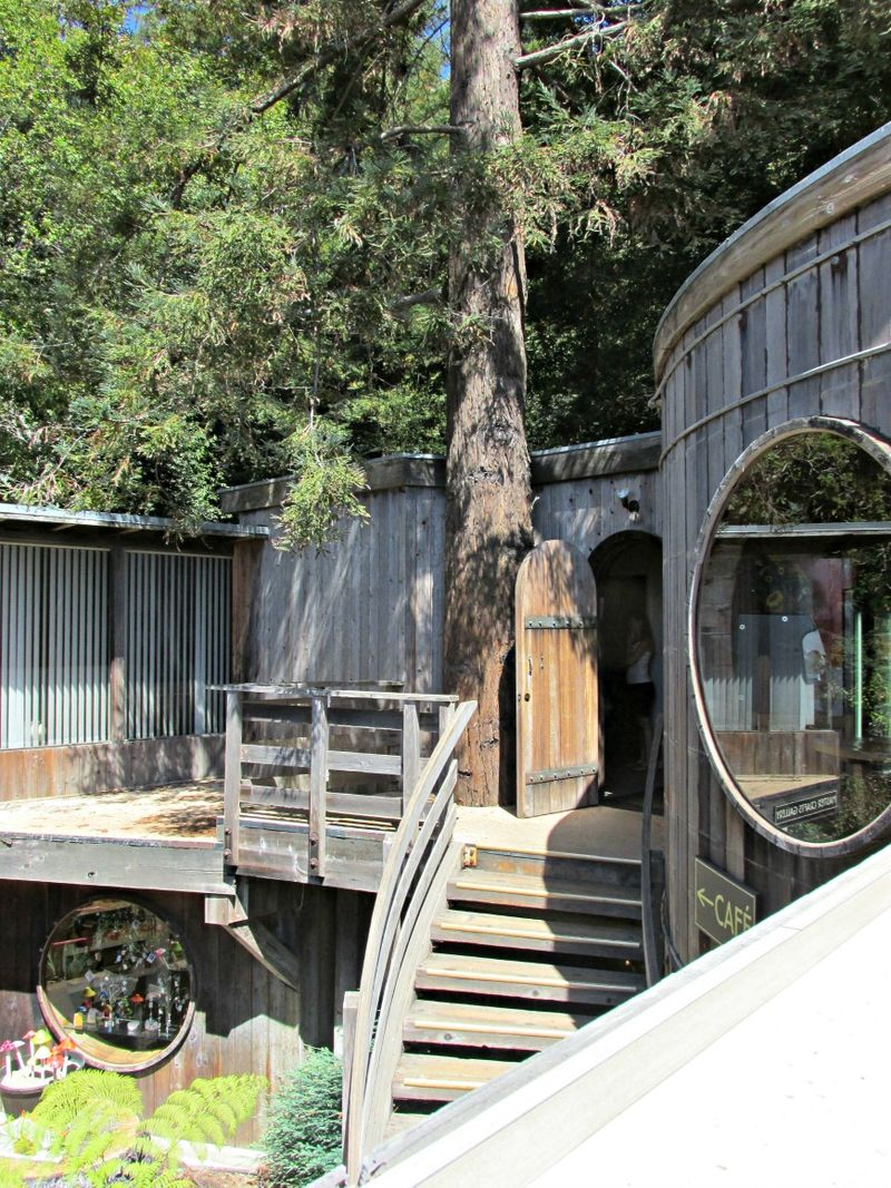 Tree house on the coast
