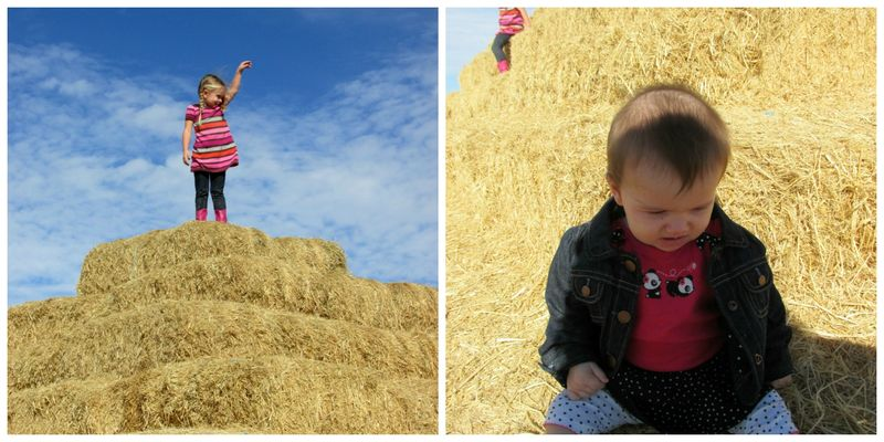 Corn maze haystack Collage