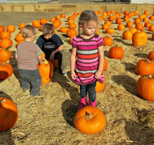 Pumpkin patch audrey