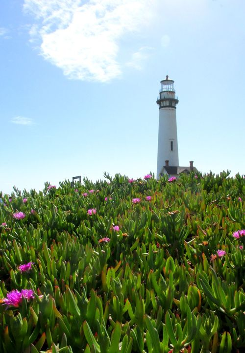 Pigeon Point light house flowers