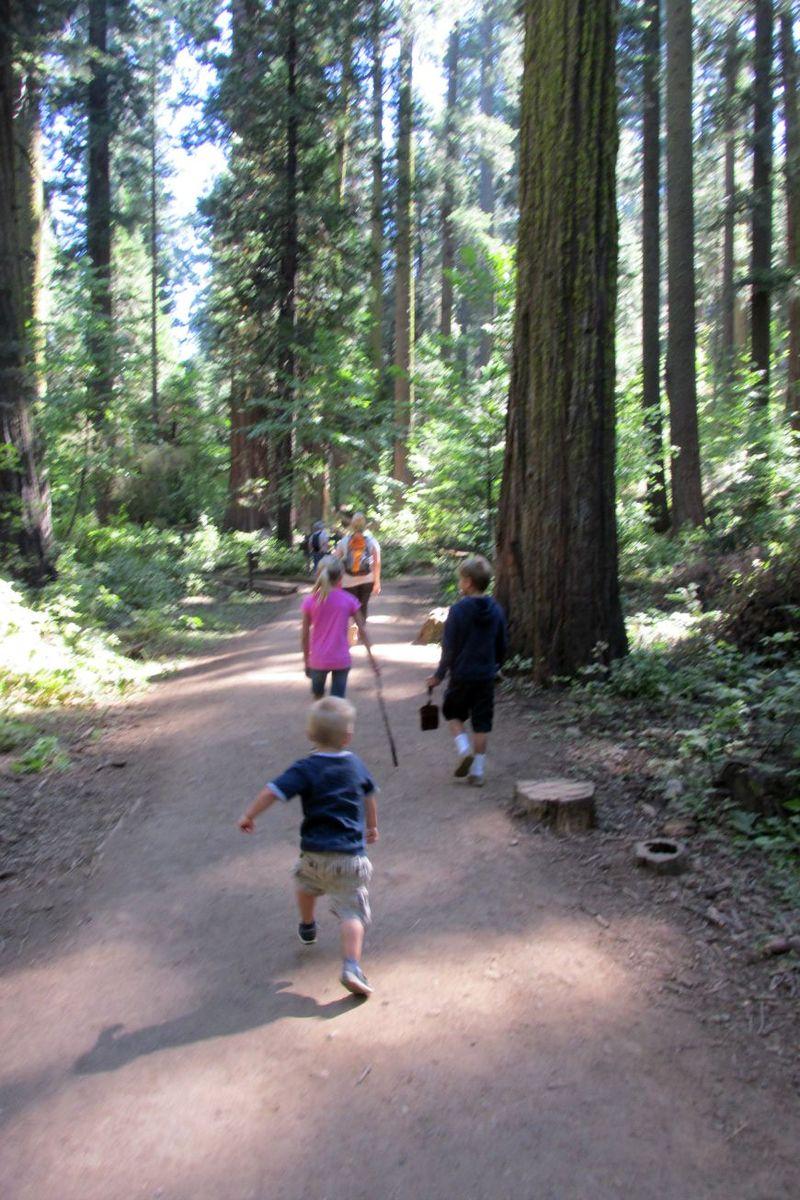 Cabin big trees hiking cole