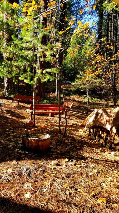 Cabin nov 2015 wood