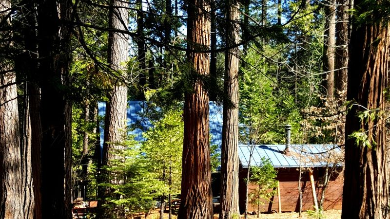 Cabin- back yard blue roof