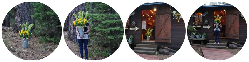 Cabin daffodil day bunkie Collage