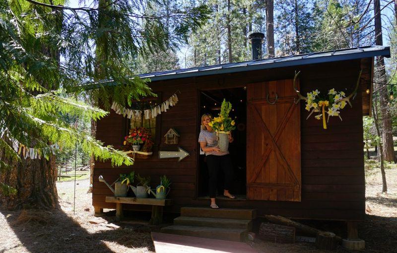 Cabin daffodil day jill