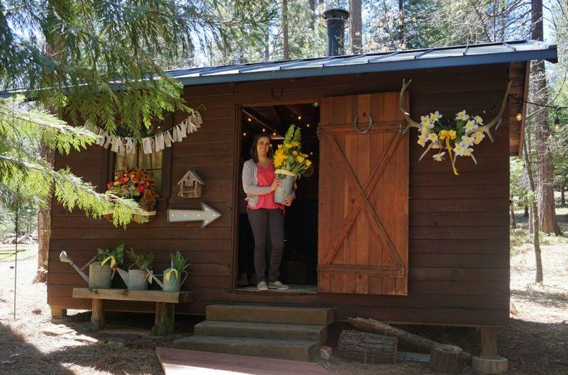 Cabin daffodil day pattie