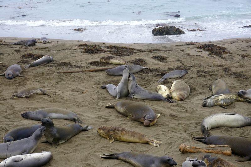 AVW seal beach 9