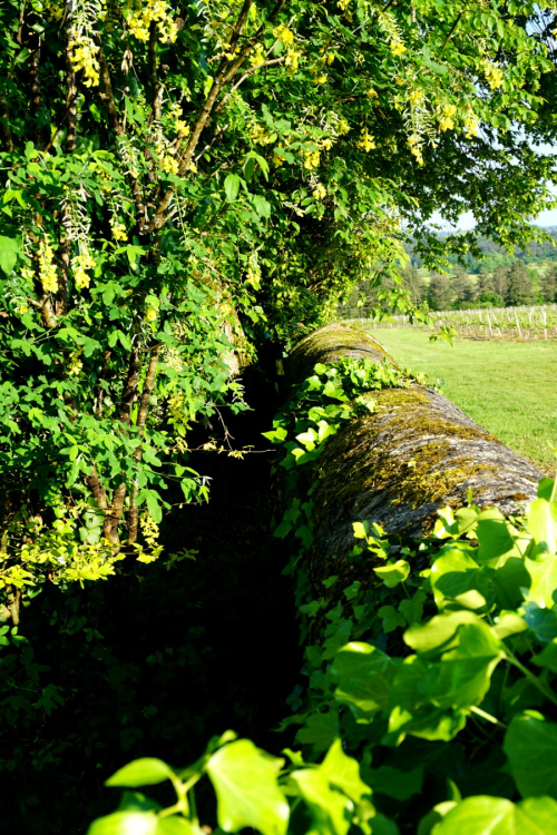 Academy france ivy wall