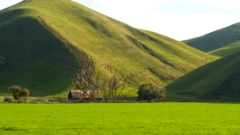 Cancer green hill
